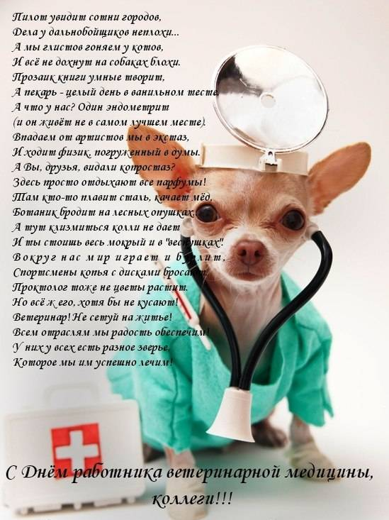 Поздравление коллегам ко дню ветеринара