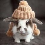 Кролик в <b>шапке</b>  смайлик