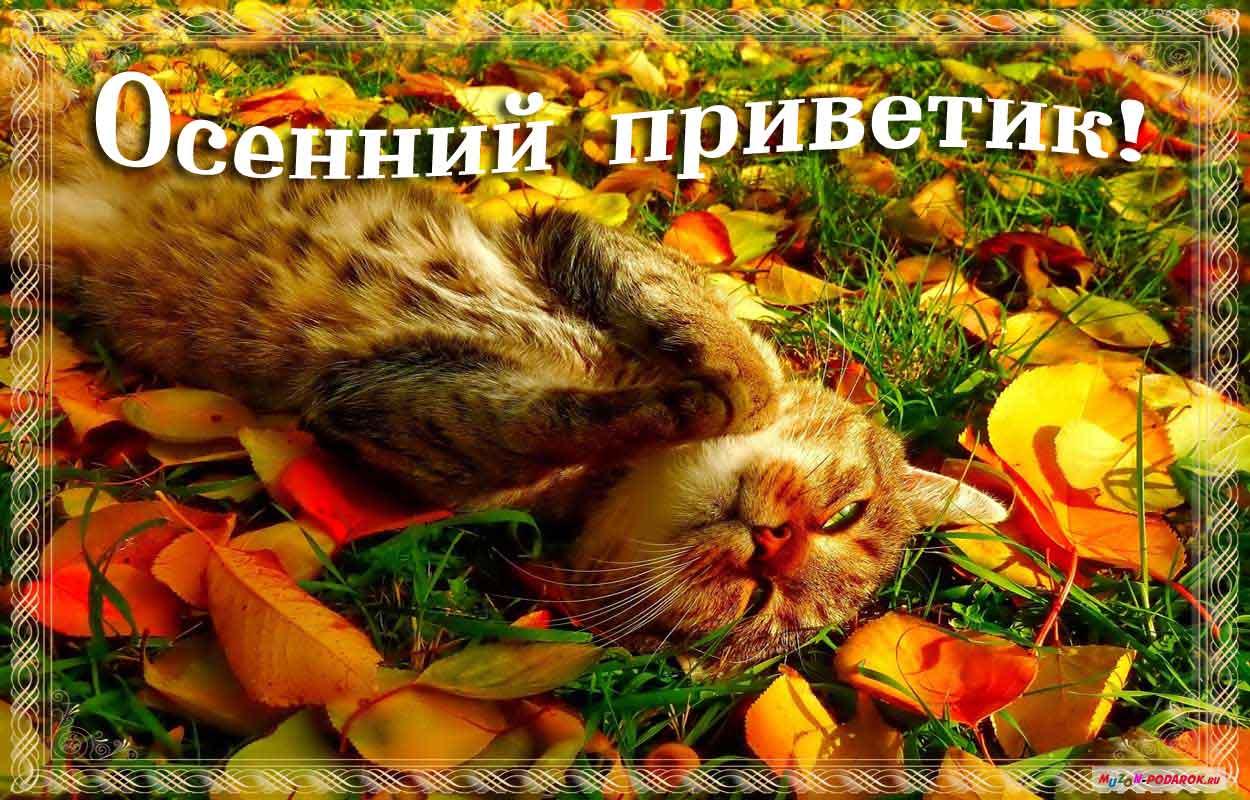 Днем рождения, осень открытки фото