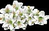 Осенние цветы смайлики