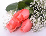 http://wdesk.ru/_ph/191/2/969584681.jpg?1496648323