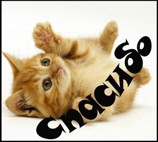 Тему сердце, спасибо открытка с котиком