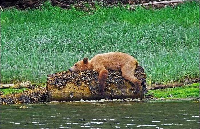 смайлик медведь: