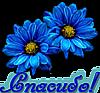 Спасибо! Два синих цветка