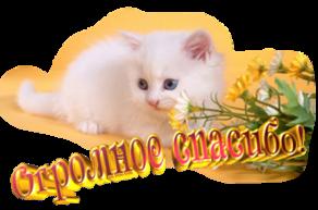 http://wdesk.ru/_ph/91/2/885171909.png